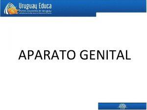 APARATO GENITAL DEFINICIONES APARATO GENITAL GNADAS en ellas