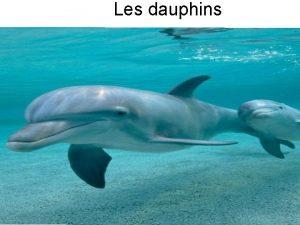 Les dauphins Sommaire Lalimentation Les parties du corps