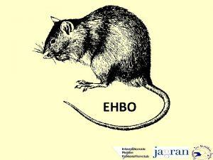 EHBO Doel het bestrijden en voorkomen van dreigend