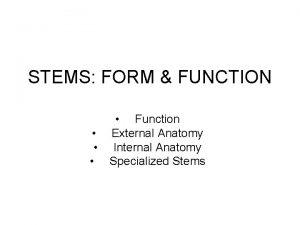 STEMS FORM FUNCTION Function External Anatomy Internal Anatomy