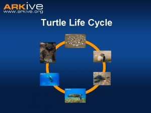 Turtle Life Cycle What is a life cycle
