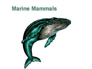 Marine Mammals Return to the Oceans Mammals have