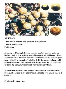 ALUPAG Litchi chinensis Sonn ssp philippinensis Radlk Leeanh