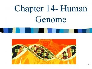 Chapter 14 Human Genome 1 I Human Heredity