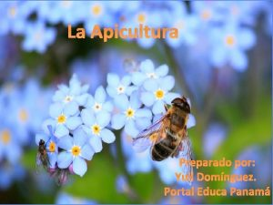 La Apicultura Preparado por Yuli Domnguez Portal Educa