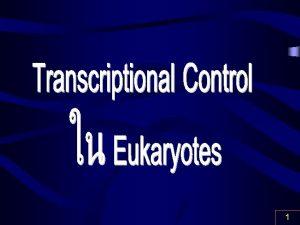 1 Gene Expression Eukaryotic Cells Control Spatial Temporal