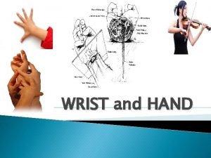 WRIST and HAND Wrist and Hand The hand