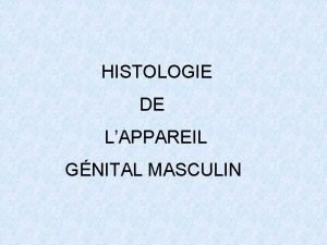 HISTOLOGIE DE LAPPAREIL GNITAL MASCULIN PLAN I INTRODUCTION