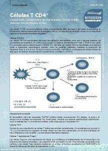 CLULAS T CD 4 BLOQUE CLULAS Clulas T