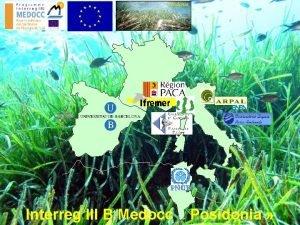Posidonia Interreg III B Medocc Posidonia LES ACQUIS