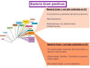 Bacteria Gram positivas Bacteria Gram con alto contenido