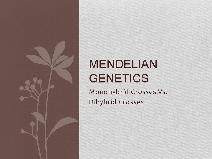 MENDELIAN GENETICS Monohybrid Crosses Vs Dihybrid Crosses Dihybrid