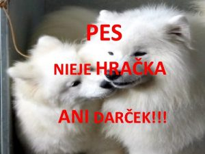 PES NIEJE HRAKA ANI DAREK Pes domci canis