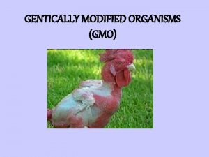 GENTICALLY MODIFIED ORGANISMS GMO What are Genetically Modified