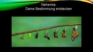 Nehemia Deine Bestimmung entdecken Gottes Plan den Auftrag