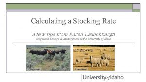Calculating a Stocking Rate a few tips from