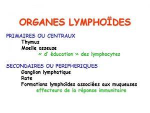 ORGANES LYMPHODES PRIMAIRES OU CENTRAUX Thymus Moelle osseuse