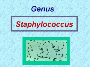 Genus Staphylococcus Classification Family Micrococcaceae Genus Micrococcus and