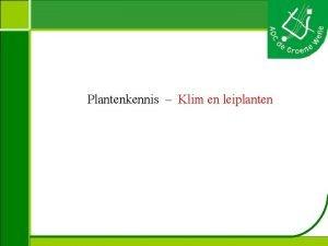 Plantenkennis Klim en leiplanten Plantenkennis Aristolochia macrophylla Duitse
