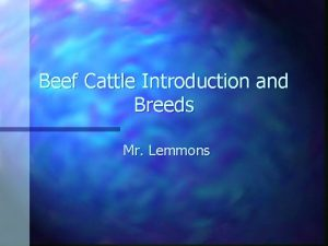 Beef Cattle Introduction and Breeds Mr Lemmons Characteristics