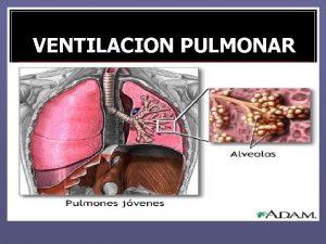 VENTILACION PULMONAR VENTILACION PULMONAR FISICA MEDICA DRA MARIA