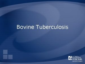 Bovine Tuberculosis Overview Organism History Epidemiology Transmission Disease