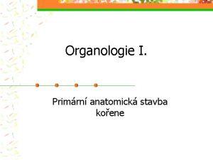 Organologie I Primrn anatomick stavba koene Primrn anatomick