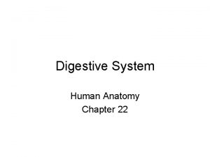 Digestive System Human Anatomy Chapter 22 Organs of