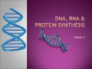 Packet 7 Notes DNA stands for DEOXYRIBONUCLEIC ACID