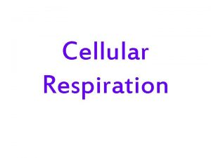 Cellular Respiration Remember Photosynthesis Why is photosynthesis Important