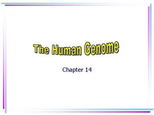 Chapter 14 Human Chromosomes Karyotype a picture of