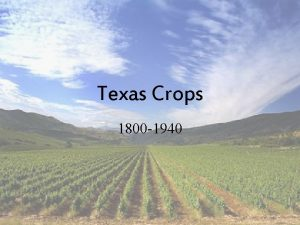 Texas Crops 1800 1940 Cotton First grown in