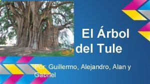 El rbol del Tule Por Guillermo Alejandro Alan
