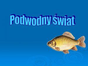 Menu RYBY Ryby ryby waciwe tradycyjna nazwa zmiennocieplnych