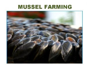MUSSEL FARMING MUSSEL FARMING The important genera are