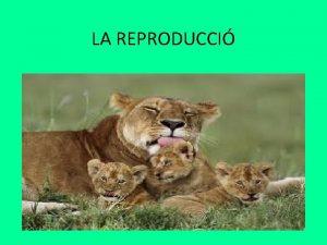 LA REPRODUCCI TIPUS DE REPRODUCCI La reproducci es
