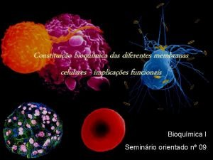 Constituio bioqumica das diferentes membranas celulares implicaes funcionais
