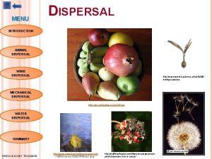 MENU DISPERSAL INTRODUCTION ANIMAL DISPERSAL WIND DISPERSAL http