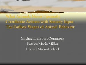 What Animals Never Operantly Coordinate Actions with Sensory