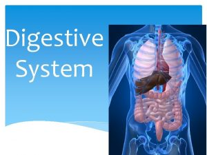Digestive System The digestive system is responsible for