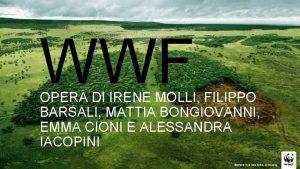 WWF OPERA DI IRENE MOLLI FILIPPO BARSALI MATTIA