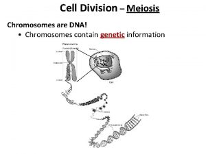 Cell Division Meiosis Chromosomes are DNA Chromosomes contain