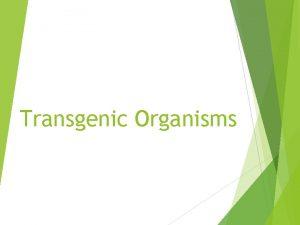 Transgenic Organisms What is a Transgenic Organism Transgenic