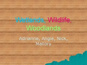 Wetlands Wildlife Woodlands Adrianne Angie Nick Mallory Our