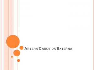 ARTERA CAROTIDA EXTERNA LIMITE Margine sup cartilaj tiroidcolul