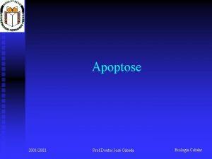 Apoptose 20012002 Prof Doutor Jos Cabeda Biologia Celular