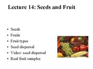 Lecture 14 Seeds and Fruit Seeds Fruit types