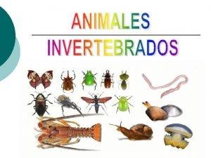 Caractersticas Los animales invertebrados son aquellos que carecen