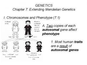 GENETICS Chapter 7 Extending Mendelian Genetics I Chromosomes