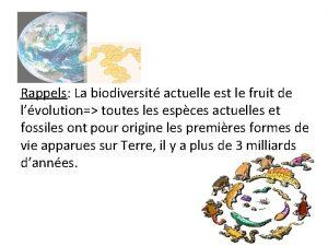 Rappels La biodiversit actuelle est le fruit de